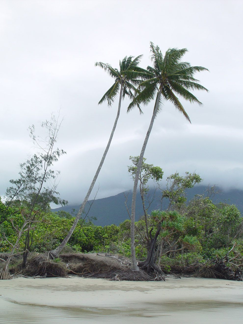 Mangroves In The Tropical Rainforest